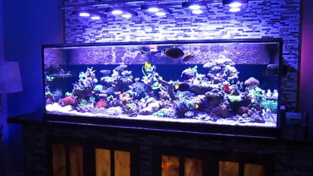 Reduce Nitrate in a Fish Tank