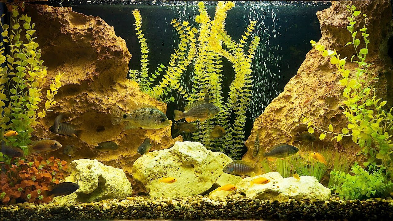 How to Treat Yellow or Brown Aquarium Water