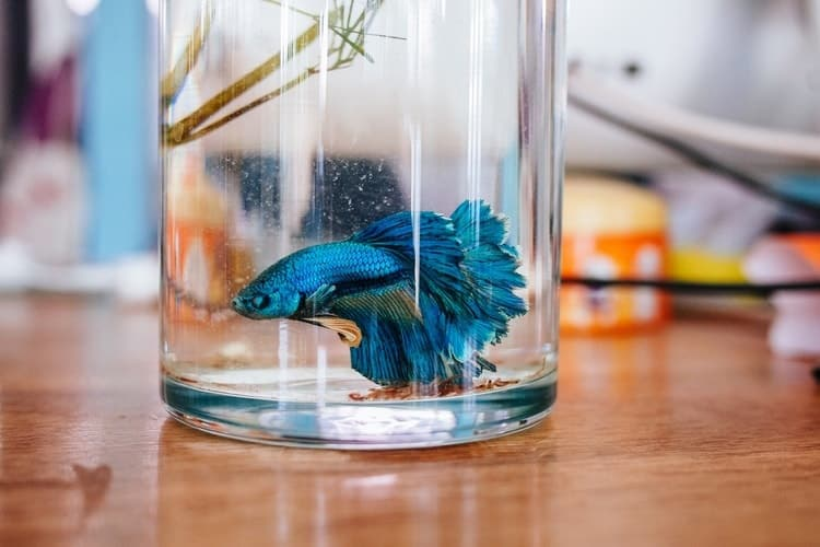 How to care your Betta Fish