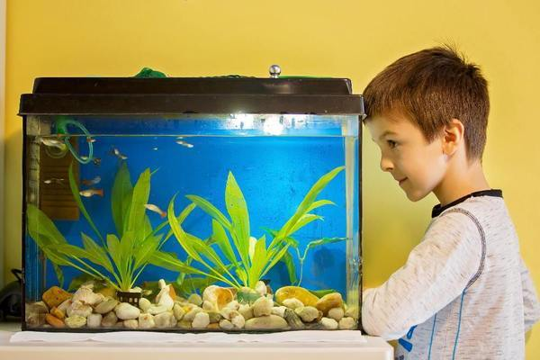 Things you need to Know Before You Buy an Aquarium