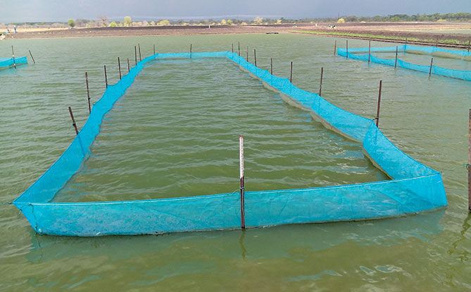Green Water Benefits for Fish