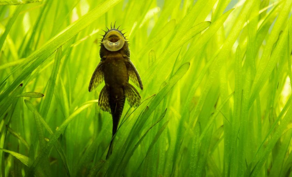 Top 10 Easy Fish For Beginners